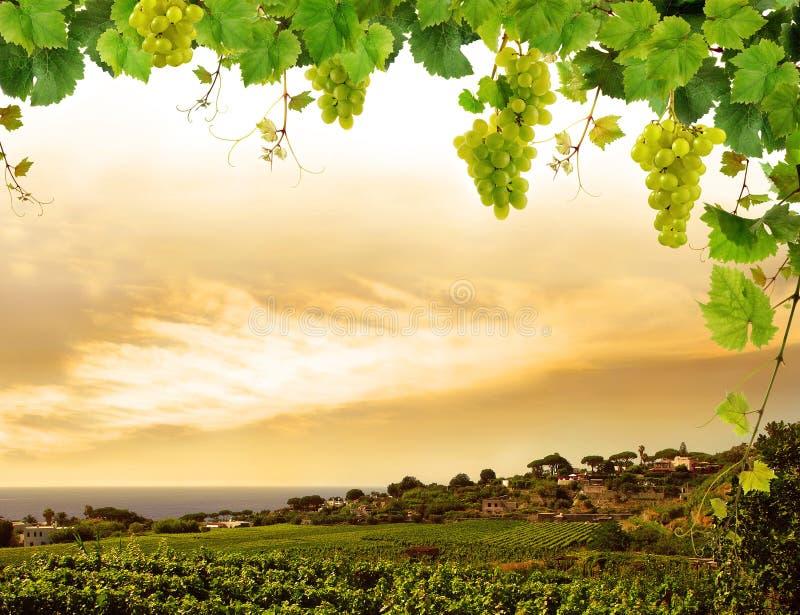 Neuer Weinstockrand mit Trauben lizenzfreie stockbilder
