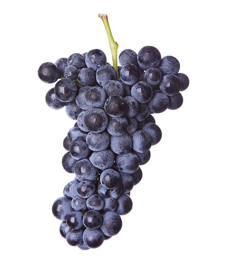 Neues Bündel Rotwein lizenzfreie stockbilder