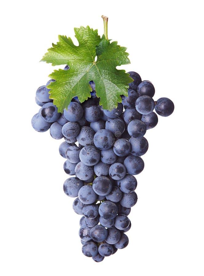 Neues Bündel Rotwein stockfoto