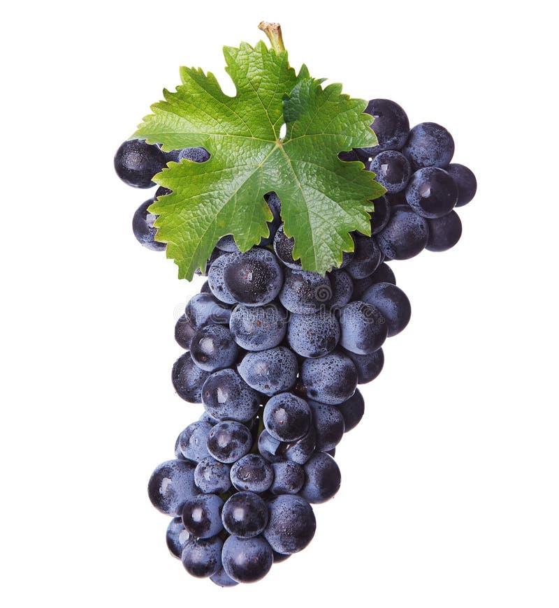 Neues Bündel Rotwein lizenzfreies stockbild