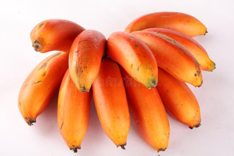 Neues Bündel tropische frische rote Bananen, stockfotografie