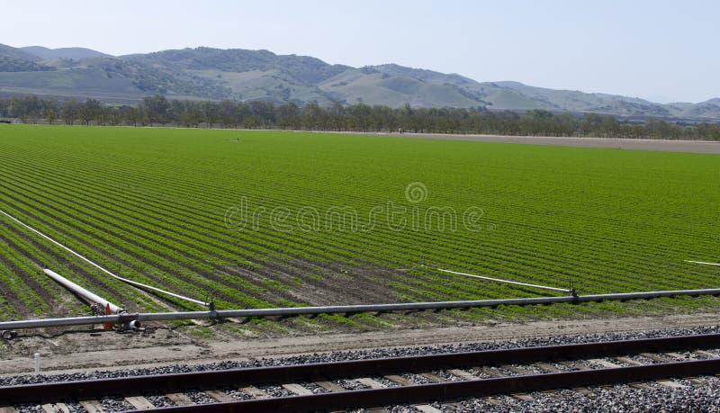 Neues Getreideanbau stockfotos