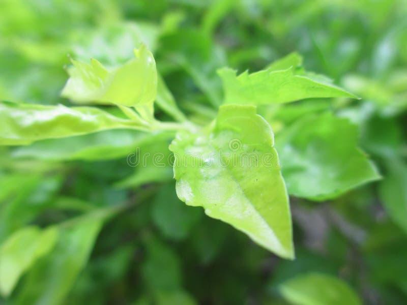 Neues Grün lizenzfreies stockbild