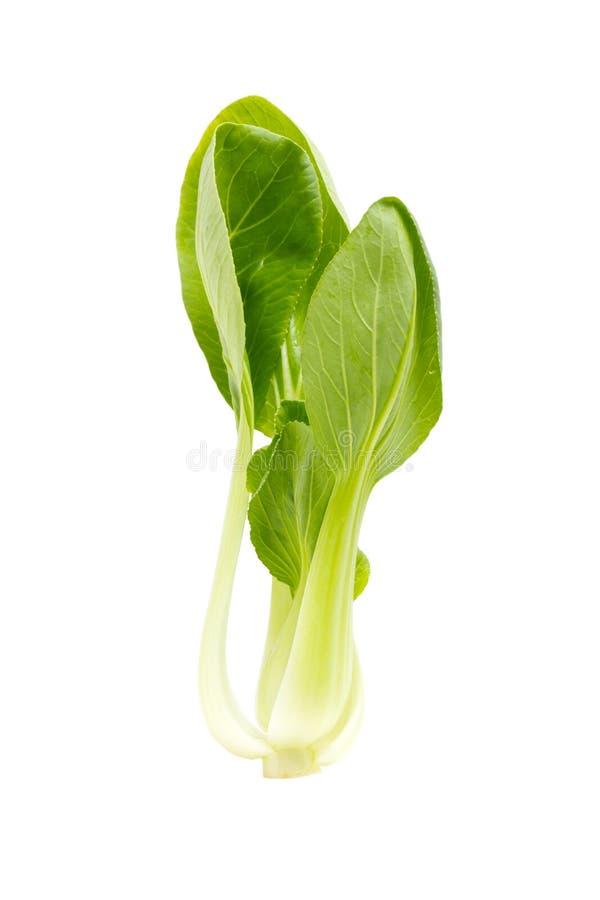 Neues grünes bok Choi. lizenzfreies stockfoto