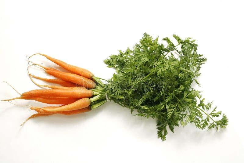 Neues junges Bündel Karotten stockfotos