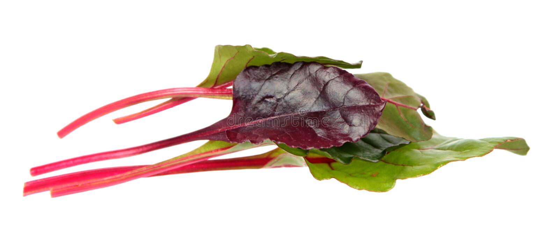 Neues junges Mangoldgemüsegrün und rote Blätter lokalisiert auf Weiß stockfotografie
