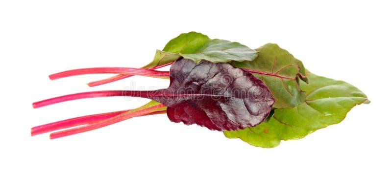 Neues junges Mangoldgemüsegrün und rote Blätter lokalisiert auf Weiß stockfotos