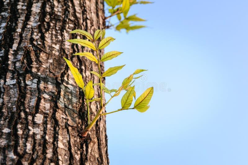 Neues Leben, das auf dem alten Bauholz wächst stockbilder