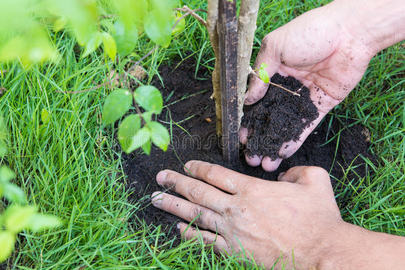 Neues Leben für Anlagen ein Baum stockfotografie