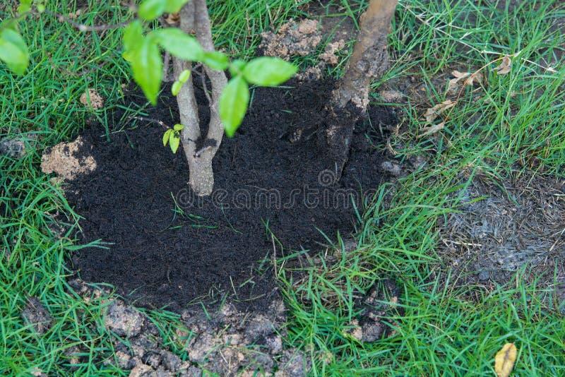Neues Leben für Anlagen ein Baum stockfotos
