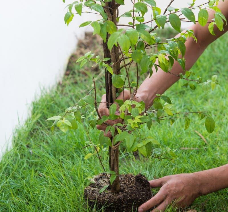 Neues Leben für Anlagen ein Baum lizenzfreie stockfotos