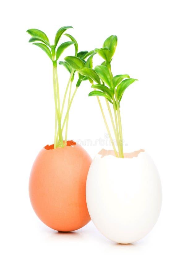 Neues Lebenkonzept mit Sämling und Ei stockbilder