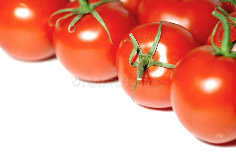 Neues Tomatefeld stockbild