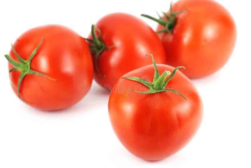 Neues Tomatemuster lizenzfreie stockfotos