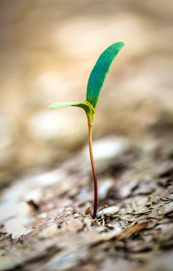 Neues Wachstum stockbild