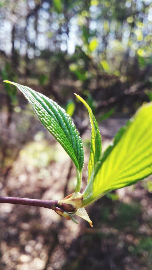 Neues Wachstum im Frühjahr lizenzfreie stockfotos