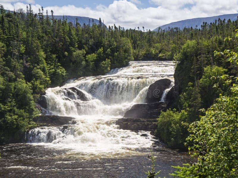Neufundland Forest Waterfalls stockfotos