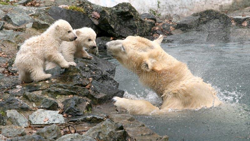 Neugeborene Eisbären lizenzfreie stockbilder