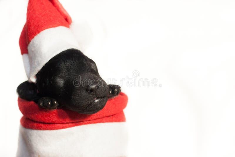 Neugeborener Welpe in einem roten Hut und in einem roten Kap lizenzfreie stockfotografie