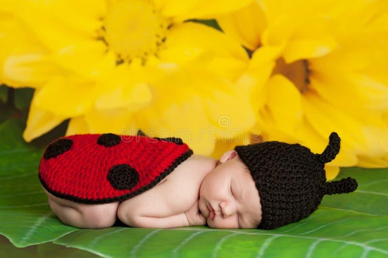 Neugeborenes Baby, das ein Marienkäfer-Kostüm trägt stockfoto