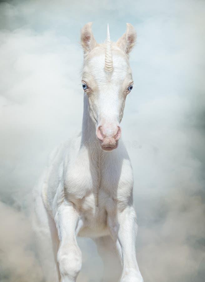 Neugeborenes Einhorn galoppiert durch magischen Rauch lizenzfreies stockbild