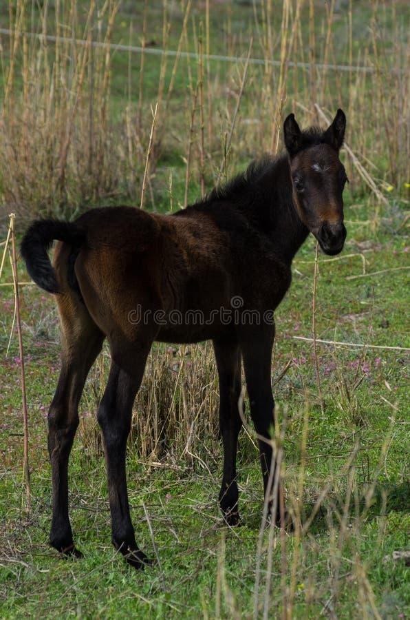 Neugeborenes Pferd lizenzfreie stockbilder