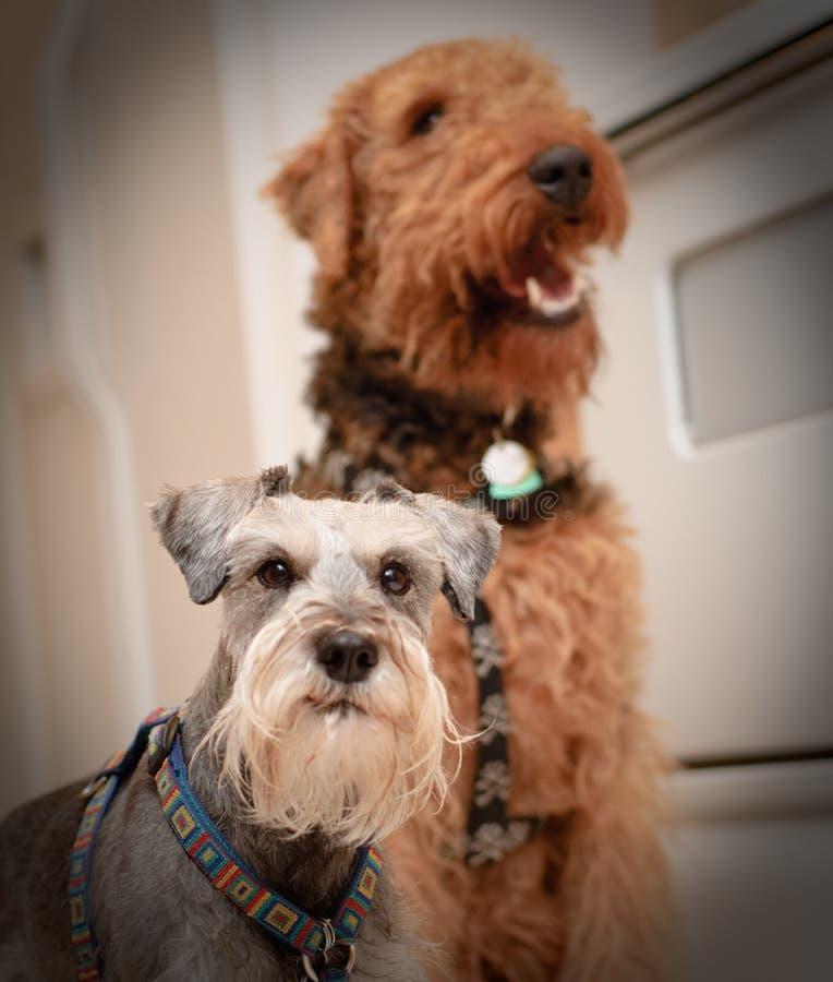 Neugierige Hunde groß und klein lizenzfreie stockfotografie
