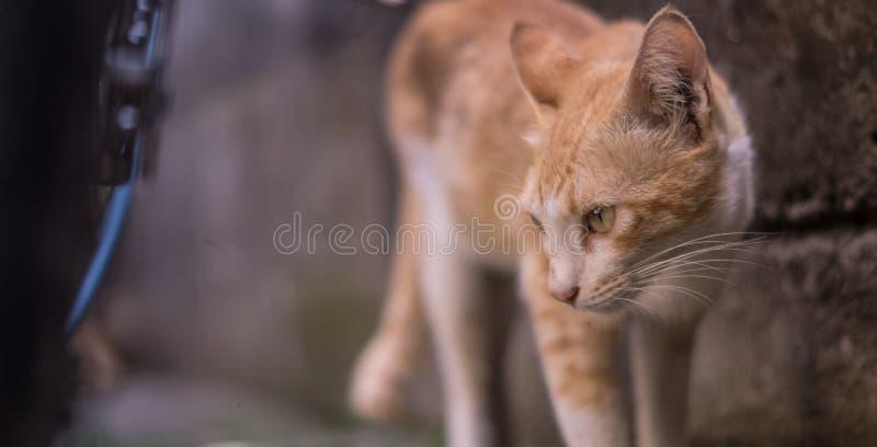 Neugierige Katze lizenzfreie stockfotografie