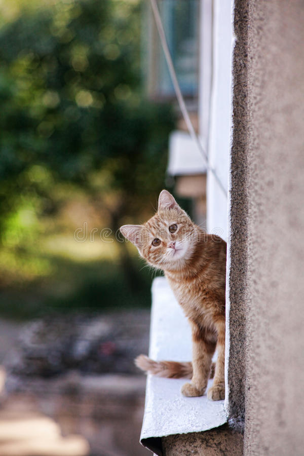 Neugierige Katze auf einem Fensterbrett stockbilder