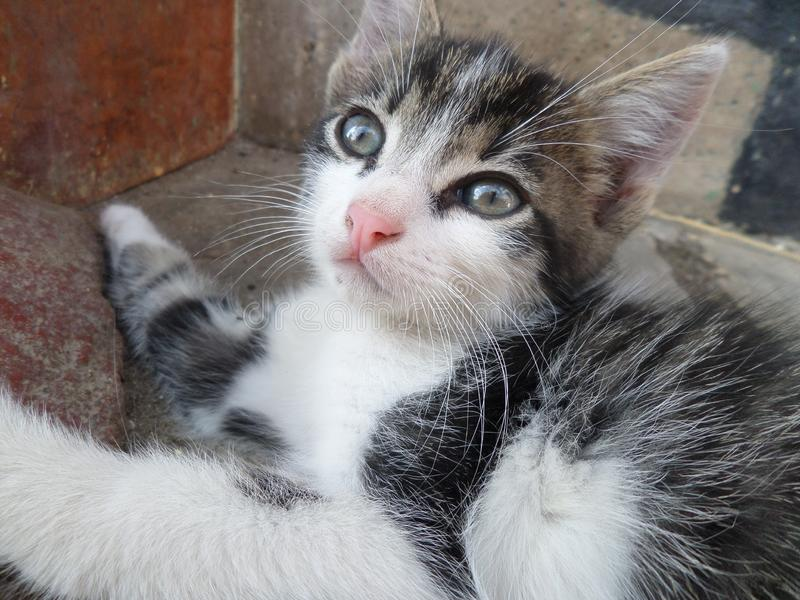 Neugierige Katze lizenzfreie stockbilder