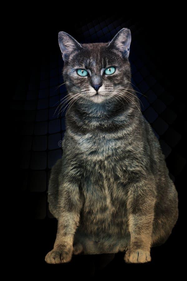 Download Neugierige Katze Mit Blaue Augen Stockfoto - Bild von süß, kitty: 106801398
