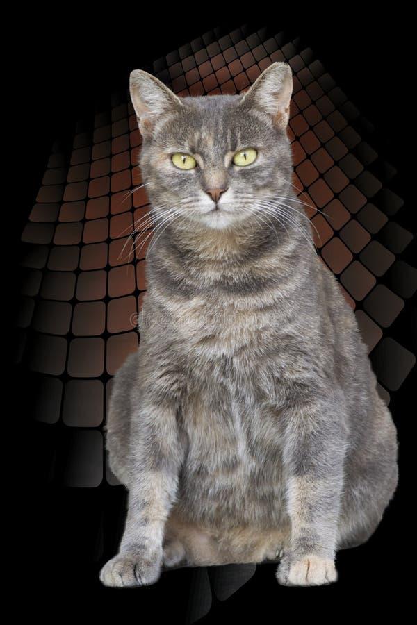 Download Neugierige Katze Mit Blaue Augen Stockbild - Bild von schätzchen, kitten: 106801449