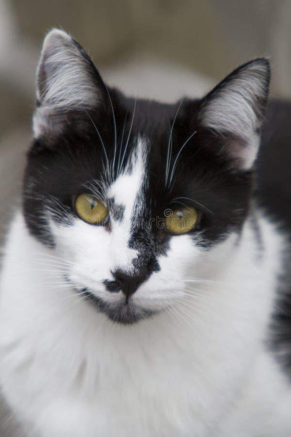 Neugierige Katze - Portrait lizenzfreie stockbilder