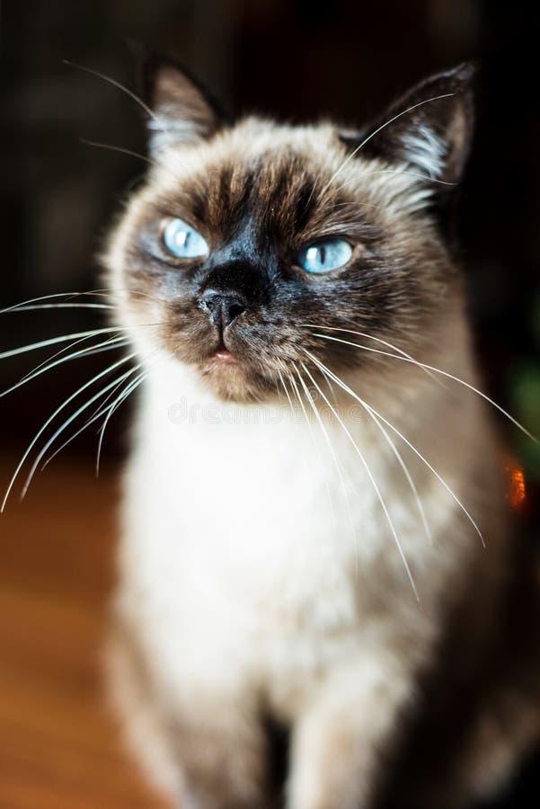 Neugierige und wachsame erstaunte männliche Katze lizenzfreies stockfoto