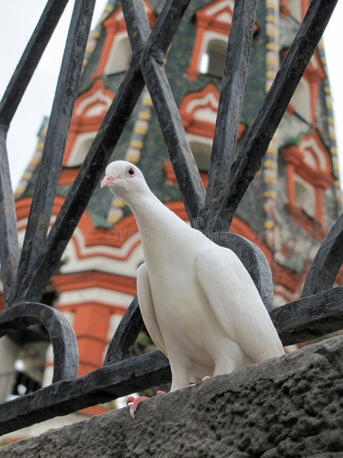 Neugierige weiße Taube und St.-Basilikum-Kathedrale auf Rotem Platz in Moskau lizenzfreies stockbild