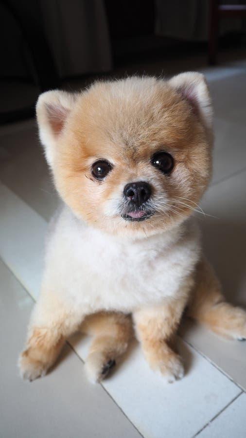 Neugieriger Hund stockbild