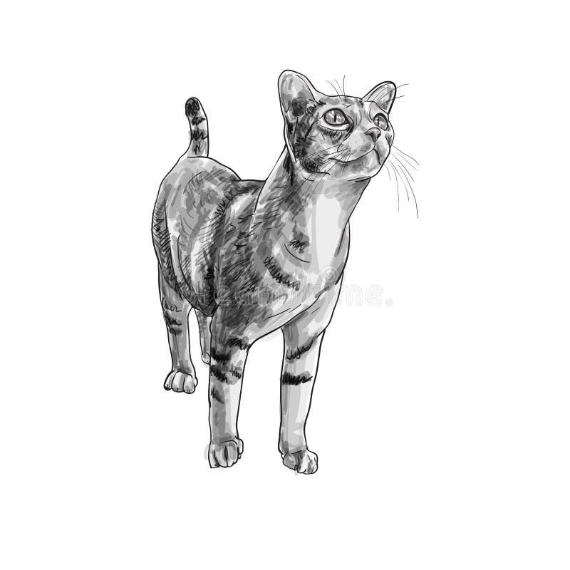 Neugieriges anstarren der entzückenden Katze etwas vektor abbildung