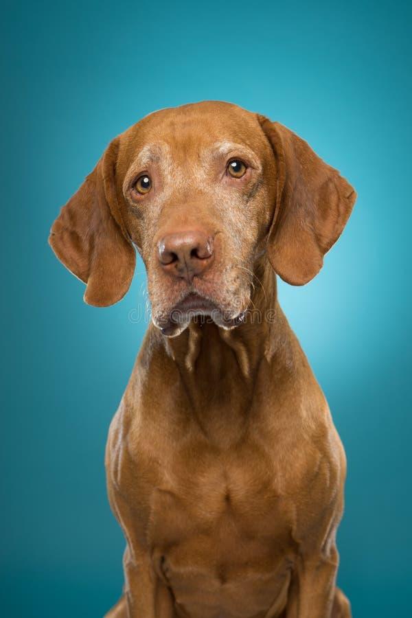 Neugieriges Hundeportrait lizenzfreie stockfotografie