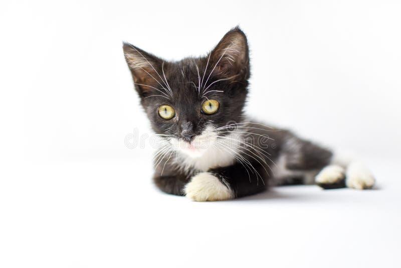 Neugieriges Kätzchen stockfotos