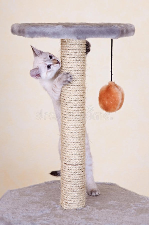 Neugieriges Kätzchenspielen lizenzfreie stockbilder
