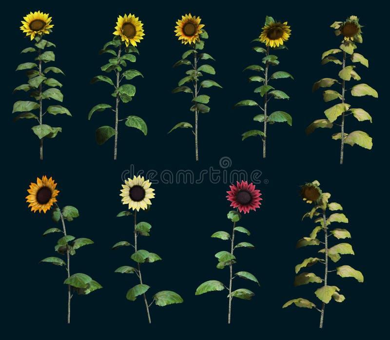 Neun Sonnenblumen 3d CG stock abbildung