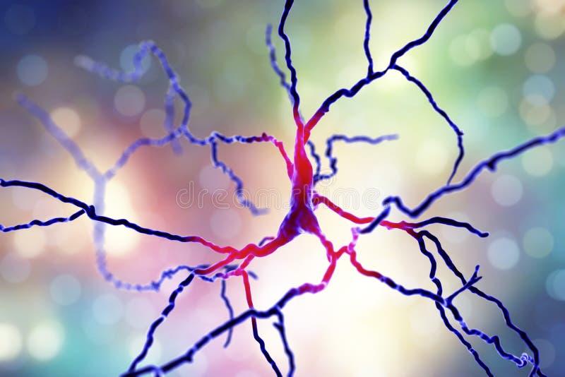 Neurônio Dopaminergic A degeneração do este neurônios é responsável para o desenvolvimento da doença do ` s de Parkinson ilustração do vetor