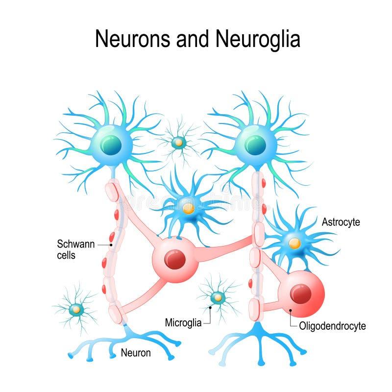 Neurônios e pilhas neuroglial ilustração royalty free