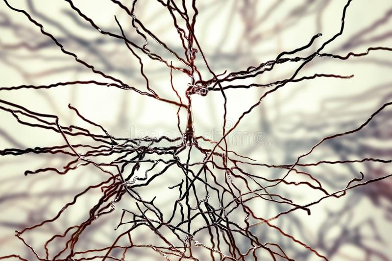 Neurônios piramidais, neurônios humanos ilustração stock