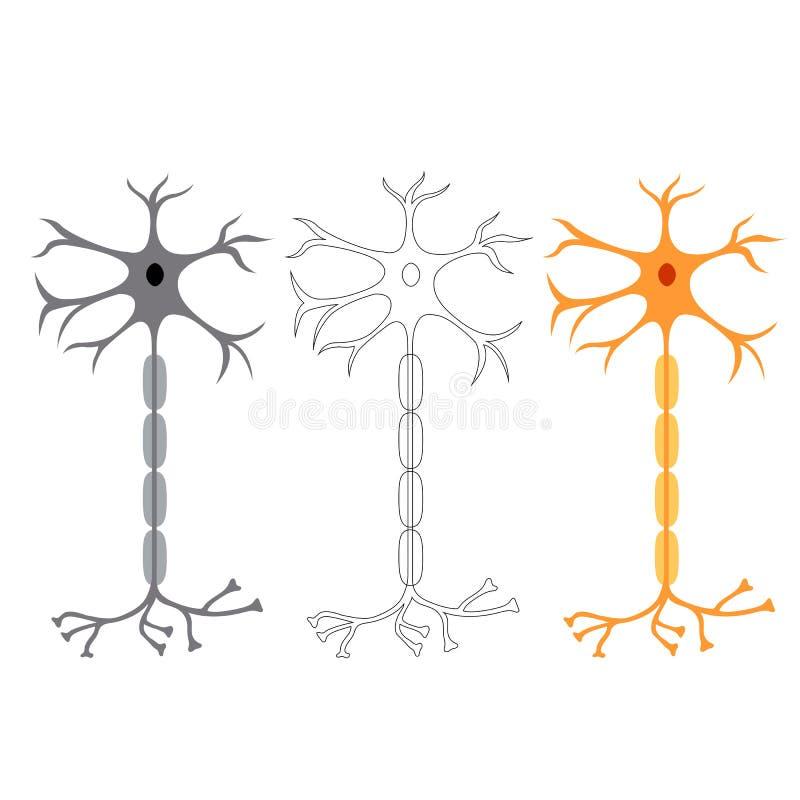 Neurônios das pilhas de nervo ilustração royalty free