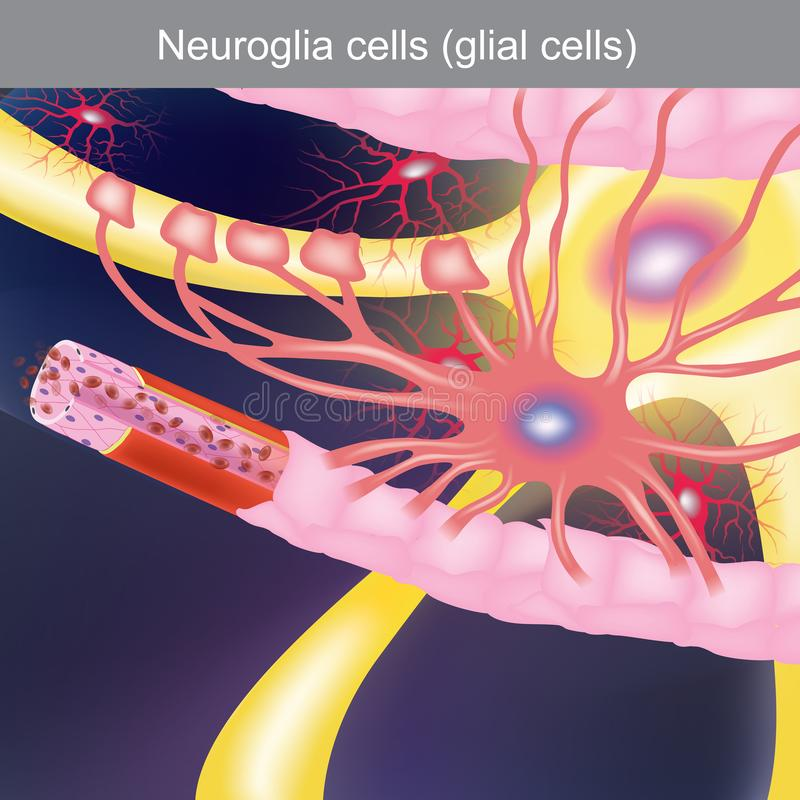 Neurogliaceller Anatomikroppsdelar stock illustrationer