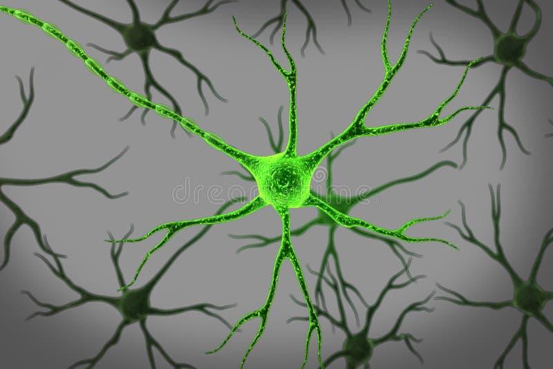Download Neuron stock illustration. Image of brain, axon, green - 16573767