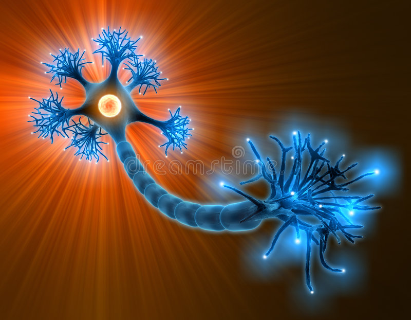Neuron. With complete structure for transmission of cellular signals