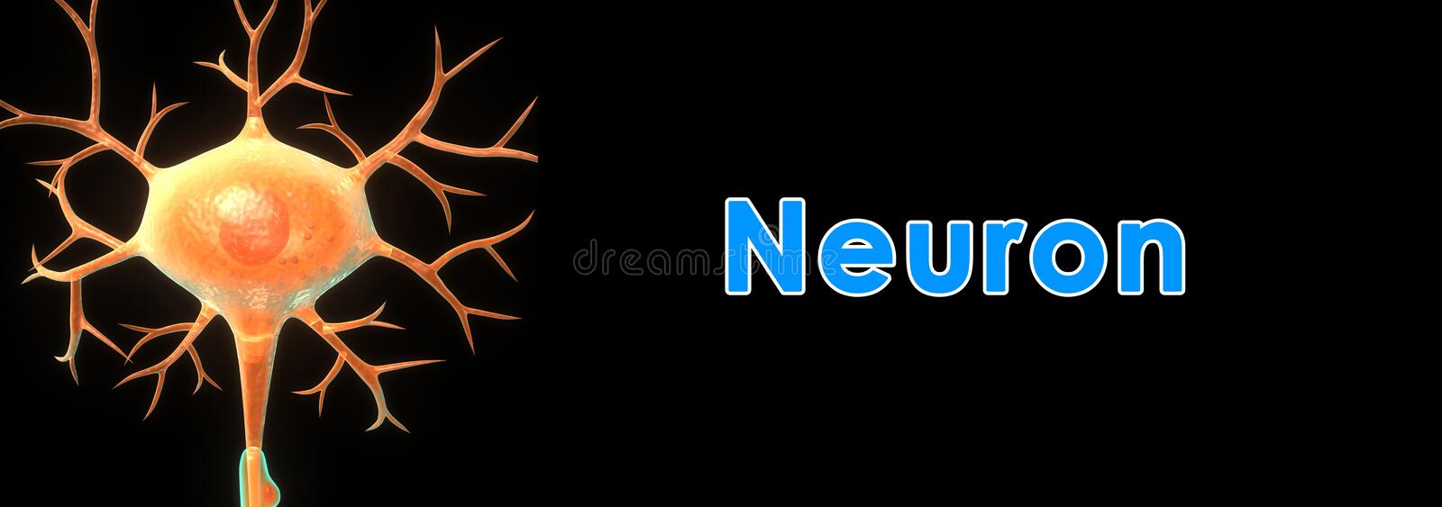 neuron vektor illustrationer
