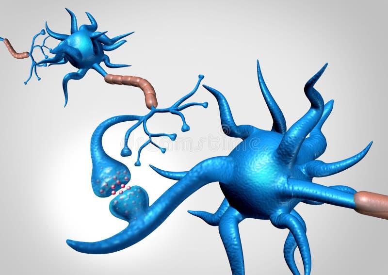 Neuron anatomia ilustracja wektor
